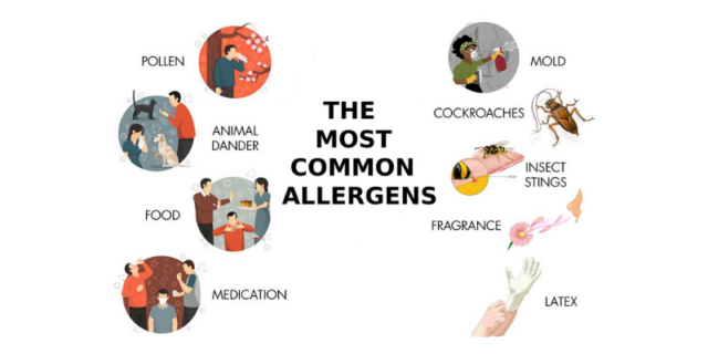 the most common home allergens